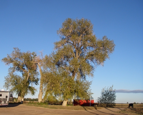 Bird-trees