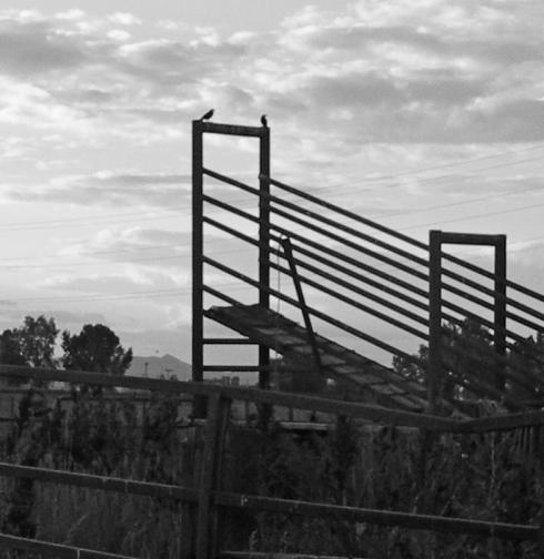 Hawks-on-gate