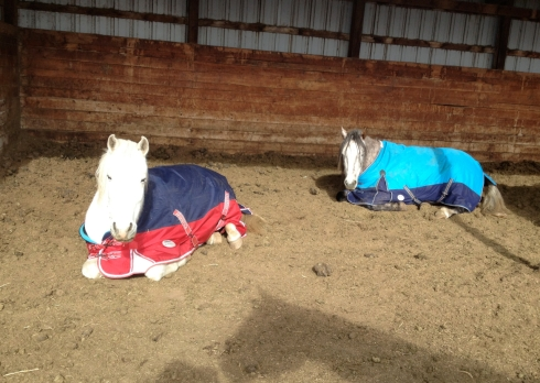 Horses-chilling
