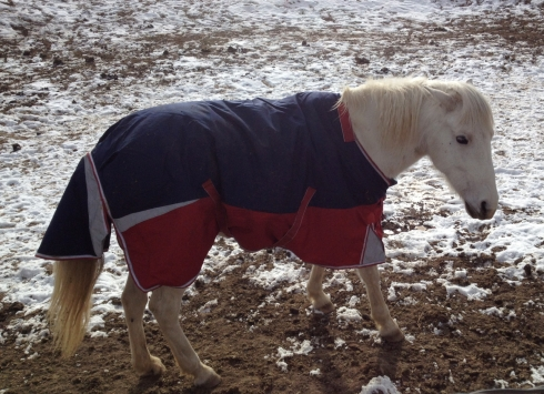 New-Coat-Mama