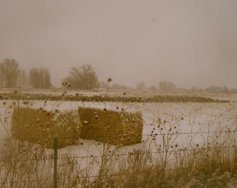 Snowy-bales