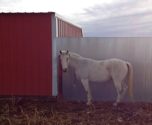 White-horse-metal-shed