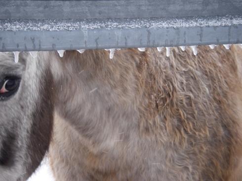 Bud-icy-gate
