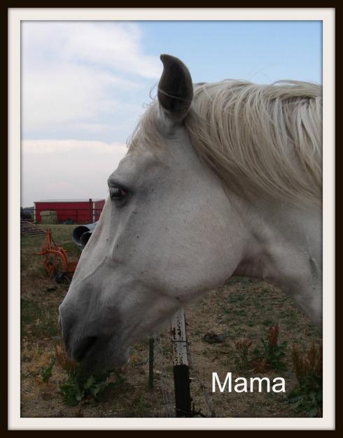 Mama-PM