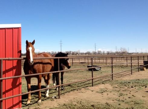 Curious-Horses-1