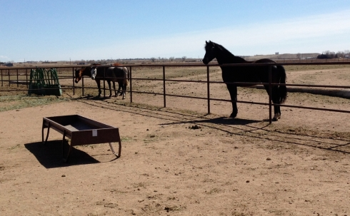 Curious Horses-2