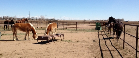 Curious Horses-3