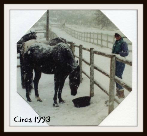 Snowy Feeding 1993