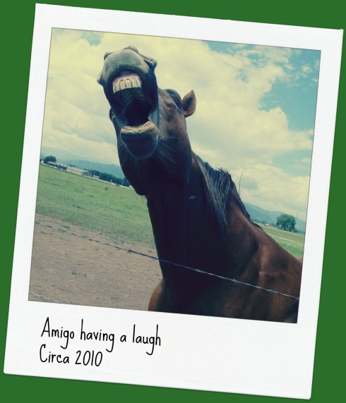 Laughing-horse-pm