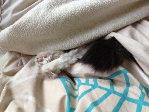 Mija-Feet