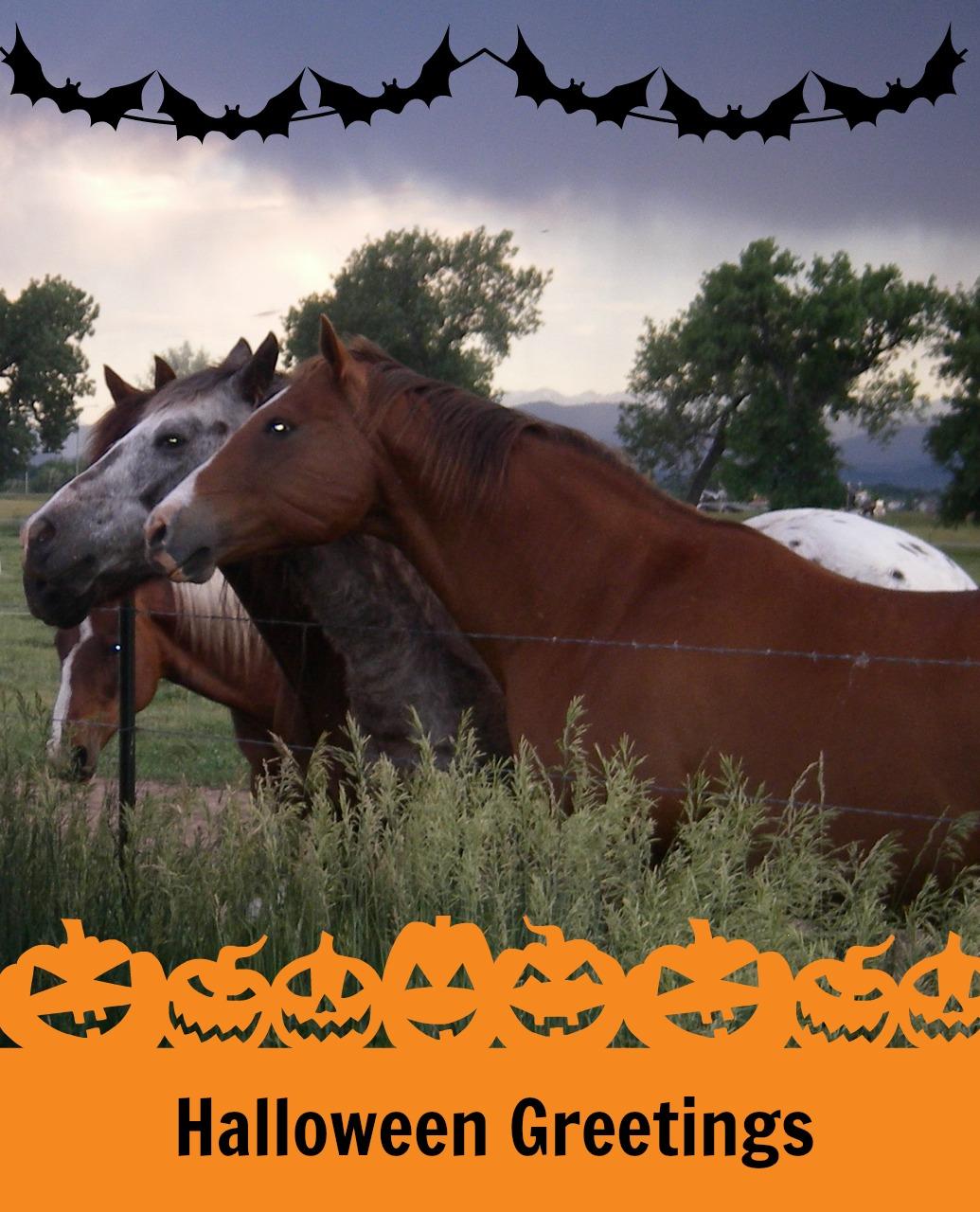 Halloween Happy horse pictures photos