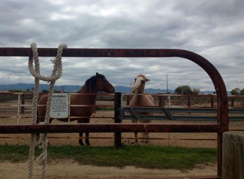Horse-conversation