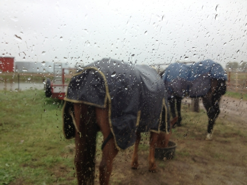 Rainy-Horses