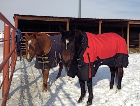 horse-hotel