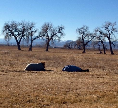 Sleeping-Horses