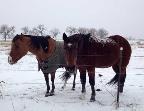 Two-Cold-Horses