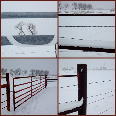 Snowy-Pasture-Collage