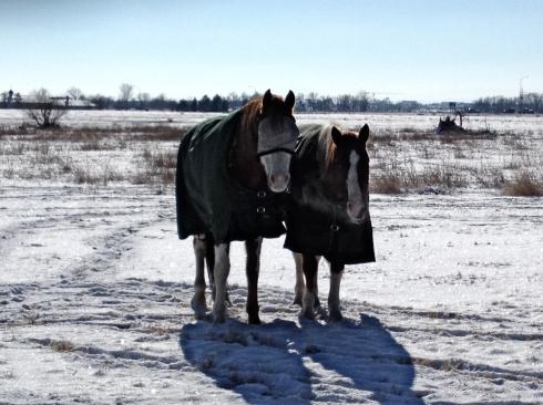 Polka Dot Ponies