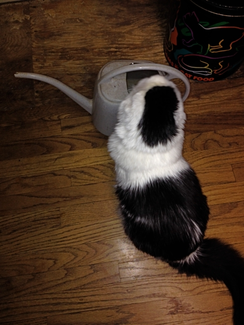 Mija-watering-can