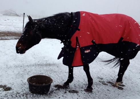 Snowy-Sunday-1