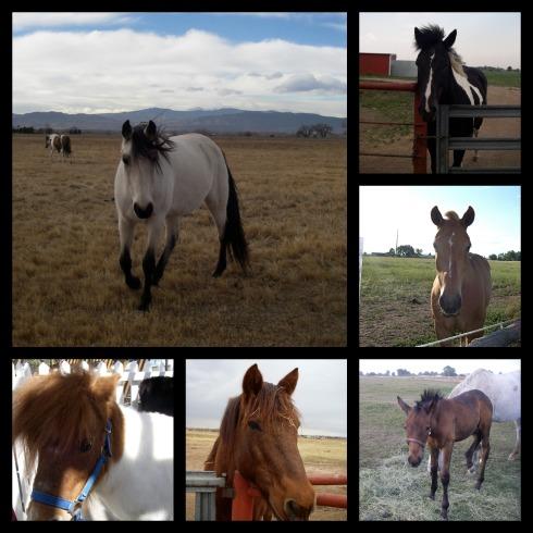 Horse-Do-Collage-2