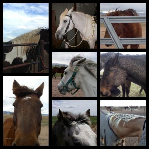 Horse-Do-Collage-3
