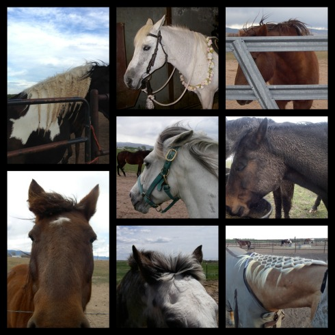 Horse-Do-Collage-3