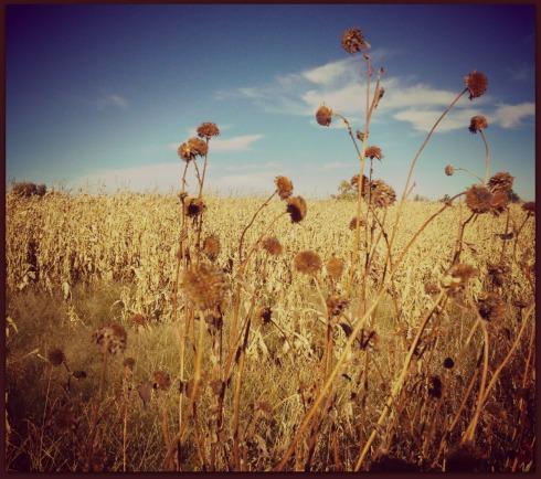 Golden-Autumn